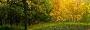 Między lasem a łąką
